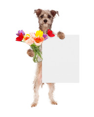 Fototapete - Dog Holding Tulips and Blank Sign
