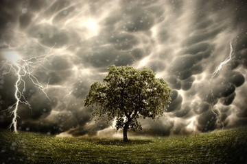 Stormy tree landscape Wall mural