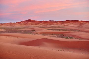 View of Sahara desert in Merzouga, Morocco, at sunset