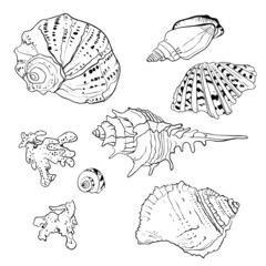 Set of vector hand drawn seashells