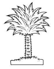 Vector Drawing of Palm Tree