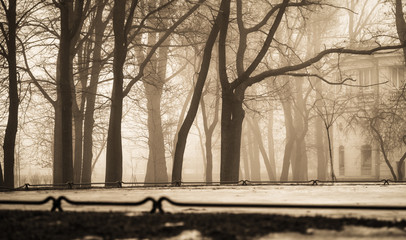 City Park in winter fog