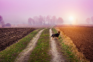 Printed kitchen splashbacks Purple Autumn foggy rural landscape with dog