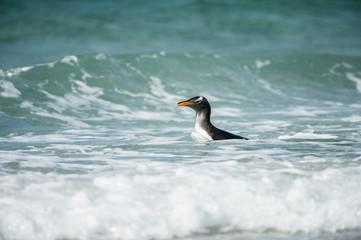 Profile of a gentoo penguin in Antarctica