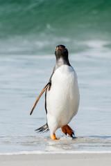 Gentoo penguin portrait in Antarctica