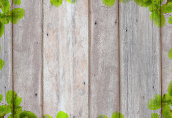 Old wooden background with green tree frame