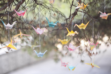 Colorful origami cranes