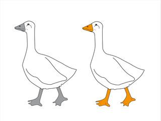 duck walking