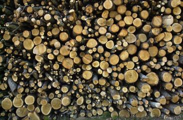 Photos illustrations et vid os de st re de bois - Poids stere de bois ...