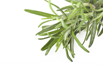 rosemary branch close up on the white