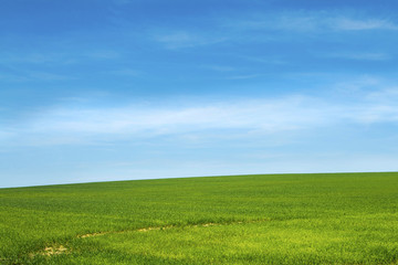 Field of green grass and sky in Slavonia, Croatia