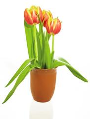 3 Tulpen in einer Vase
