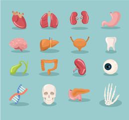 Vector internal organs cartoon icon set