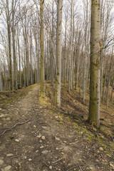 Path between beech