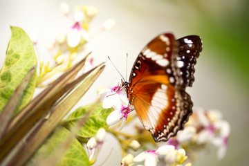 tame butterfly