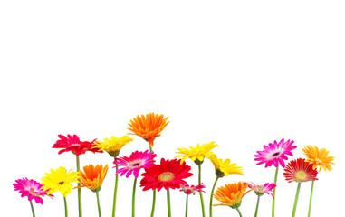 Wall Mural - bunte Blumen freigestellt