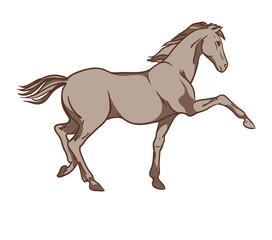 Horse vector. Hand drawn illustration