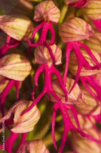 golaya-orhideya-onlayn
