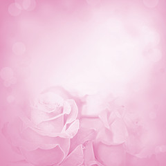 Purple background with rose flowers