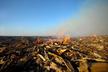 fire in a dry field corn