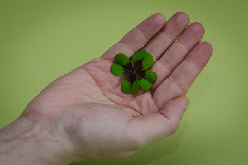 clover in hand