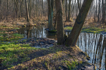 Spillage small deciduous forest river in the spring in Poland.