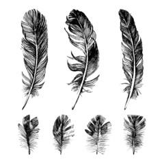 Hand drawn feathers set