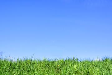 Foto op Plexiglas Weide, Moeras Green grass under blue sky.