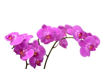 Foto auf Acrylglas Orchideen Macro shot of pink orchid isolated on white