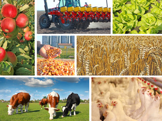 Agriculture - collage, food production