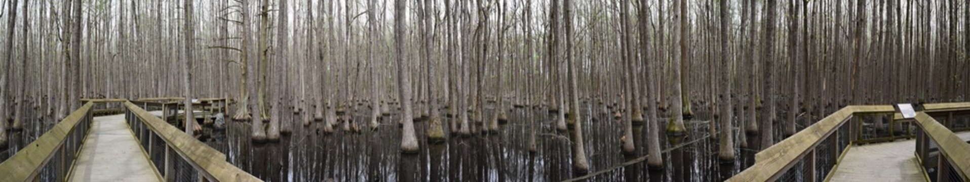 Swamp in Louisiana Purchase State Park, Arkansas