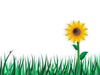 Background with sunflower and meadow