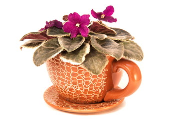 Violet flower in ceramics vase
