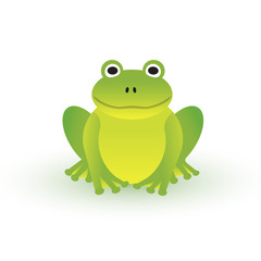 Small green frog on white background