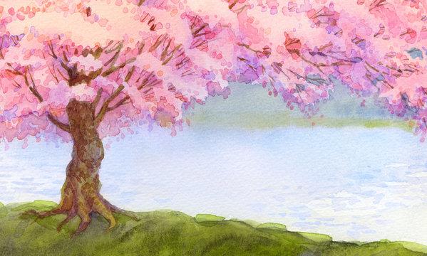 Watercolor landscape. Flowering pink tree by lake