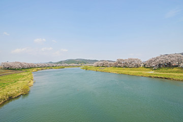 白石川と千本桜