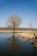 Old tree on the bank of the river in the spring against the blue