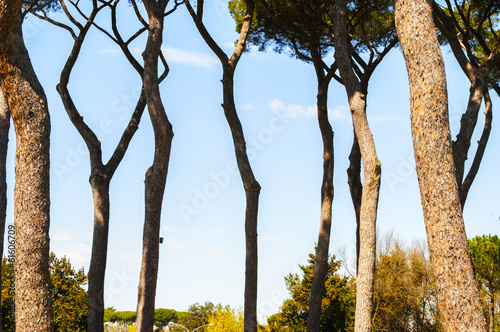 fd00d5bfb87d Fila di alberi a primavera