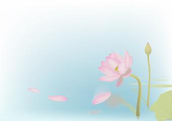 Falling off petals of lotus