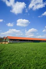 Milchviehhaltung, moderner Milchviehstall mit grüner Wiese