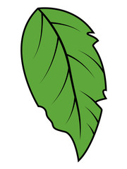Green Leaf Vector Illustration
