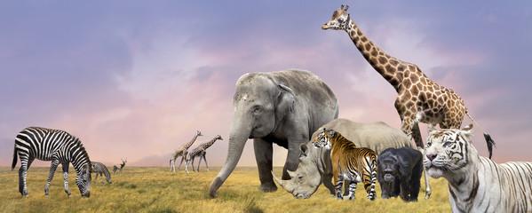 Savanna wild animals collage
