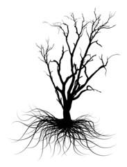 Black Dead Tree Silhouette