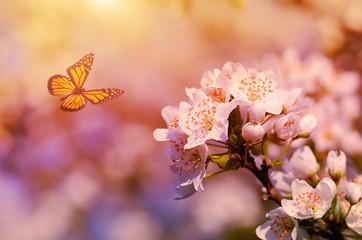 Dreamy photo of cherry flower