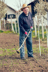 Old farmer with a hoe weeding in the garden