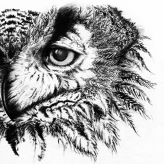 Door stickers Hand drawn Sketch of animals Owl monochrome black and white sketch
