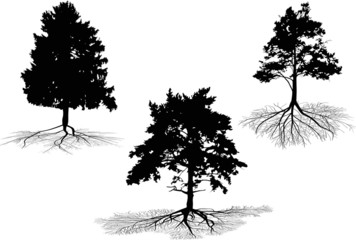three pine trees with root silhouettes