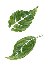 Pair of green leaves abstract vector illustration in watercolor