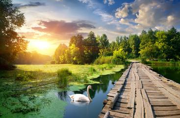 Foto auf Leinwand Fluss Swan near bridge