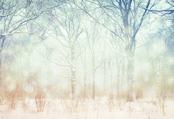 Winter  wonderland forest background.